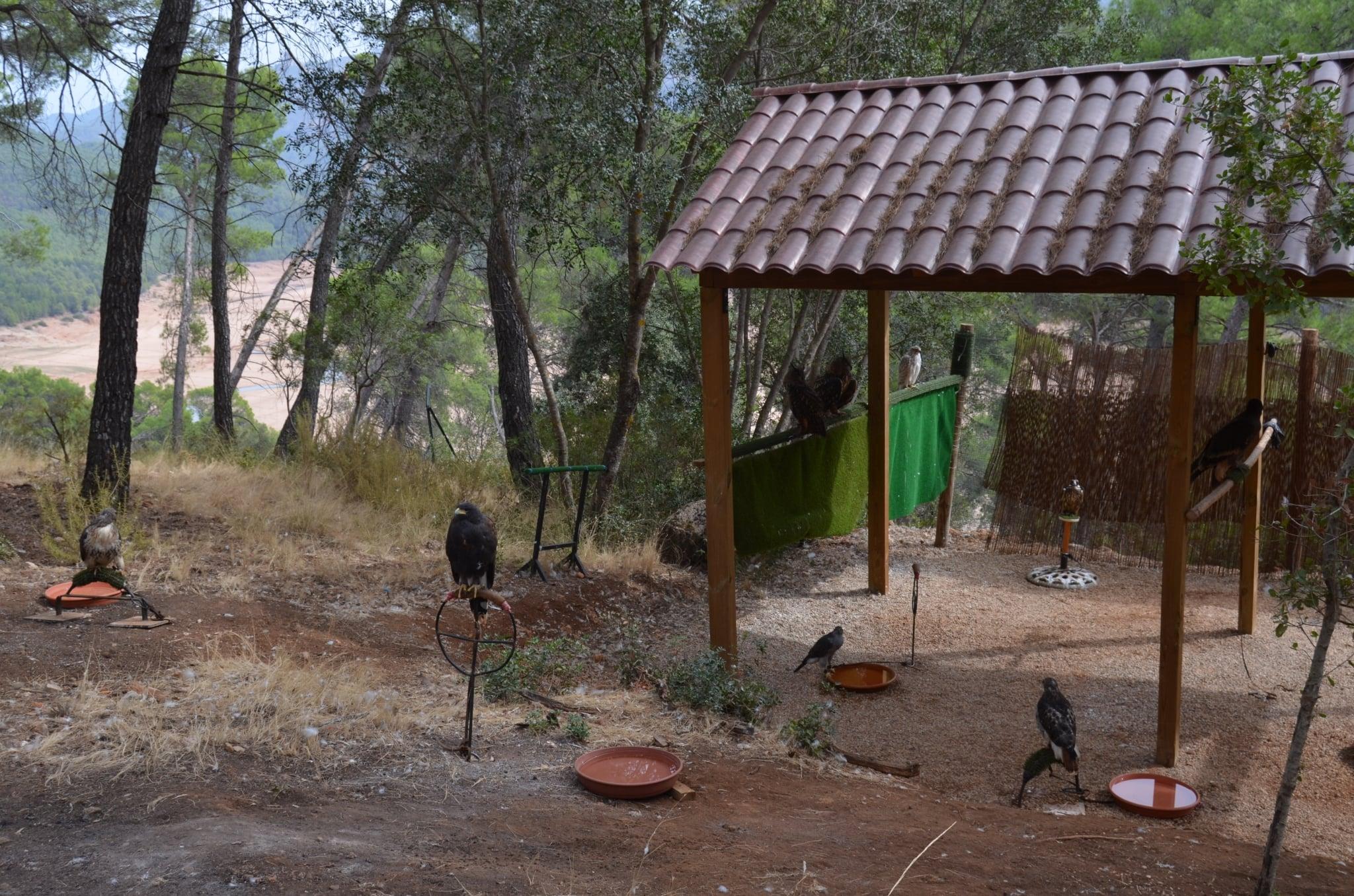 exposición y observación de aves rapaces.