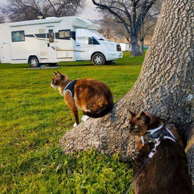 Viajar en autocaravana con animales