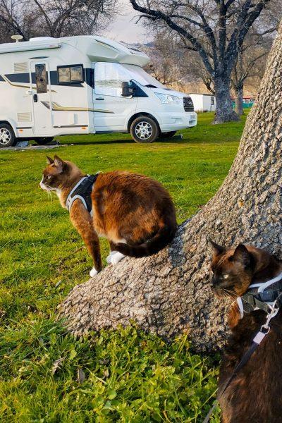autocaravana con gato