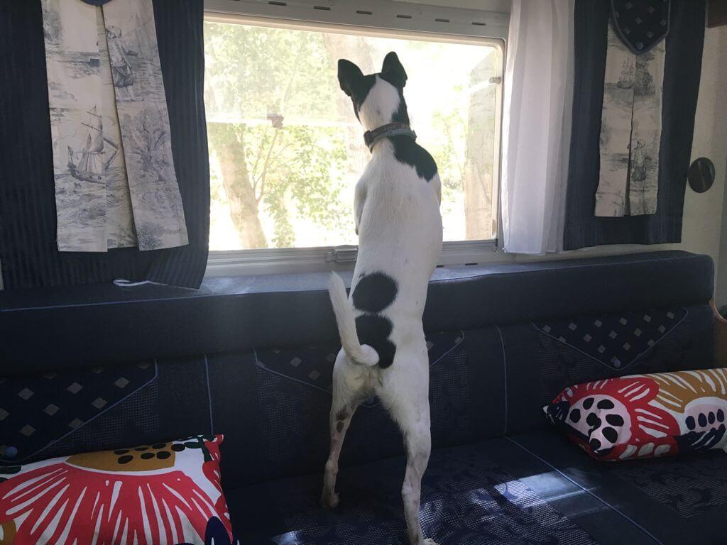 autocaravana con perro