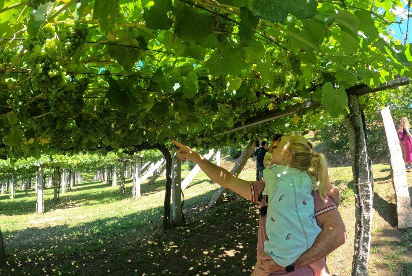 Ruta Do Viño Rías Baixas en autocaravana