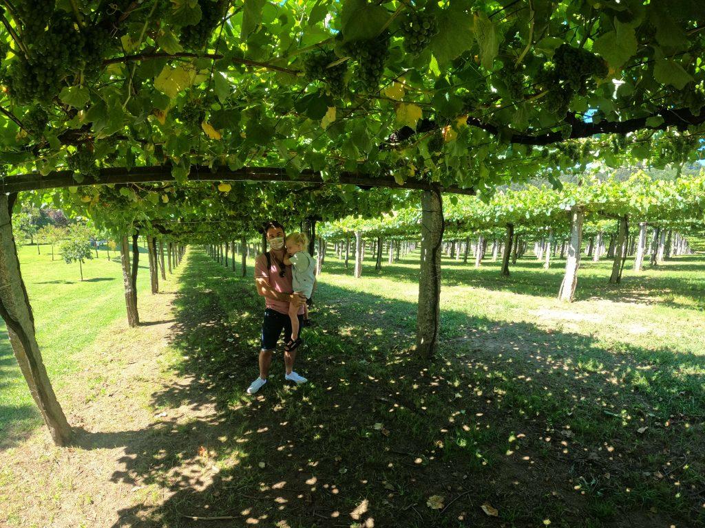 Ruta del Vino Rías Baixas en autocaravana